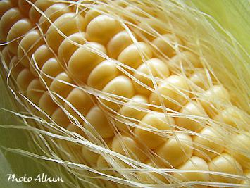 トウモロコシ(玉蜀黍)
